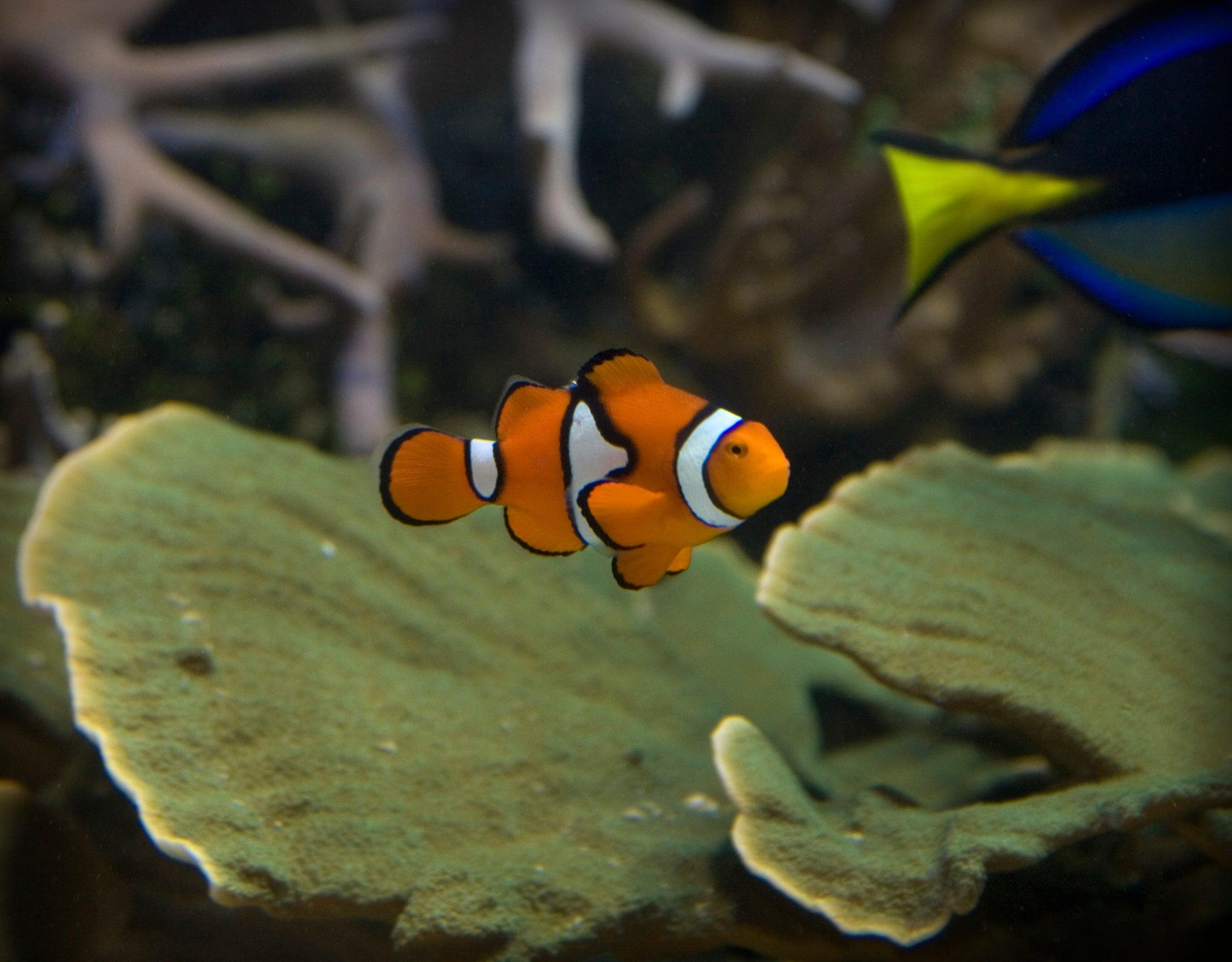 Sealife London Aquarium - Priority Entrance